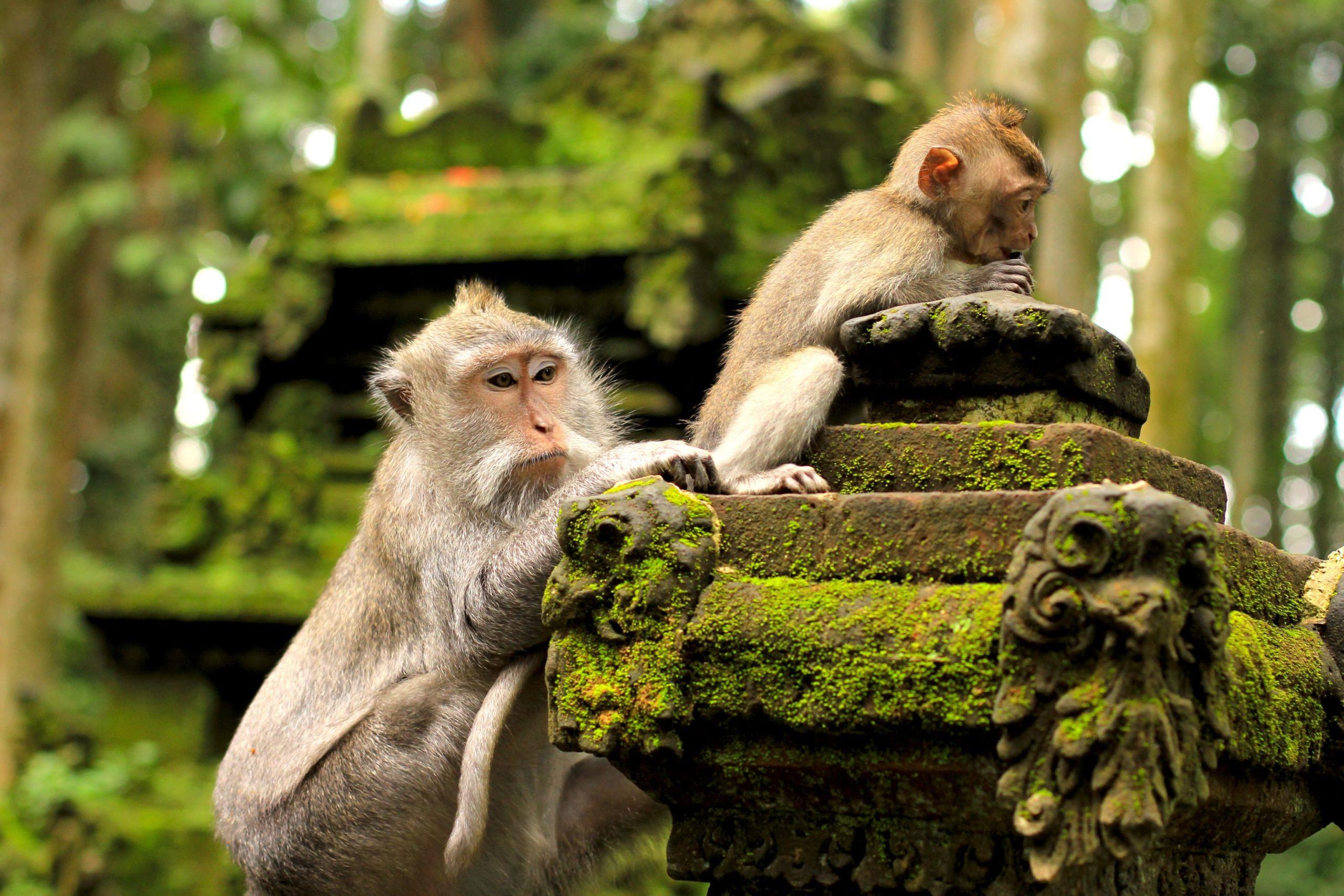 Surfing Bali Monkey Forest